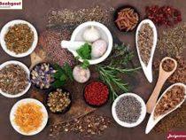 Thuốc bắc chữa bệnh gout
